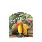 Ночная капсульная маска для лица с манго Lassieel Night Miracle Mango Sleeping Mask 2 шт